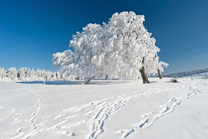 Les Vosges dans l'hiver